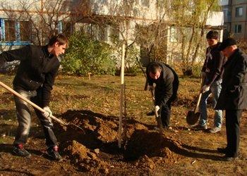 Озеленение Камышина члены Общественного совета при главе