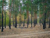 На территории Волгоградской области отменен особый противопожарный режим