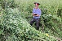 Наркосодержащие растения